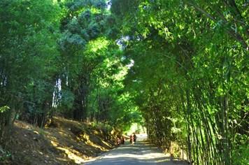 Rất cần phục hồi những lũy tre làng ở vùng rốn lũ miền Trung