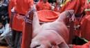"""""""Giữ"""" hay bỏ lễ hội chém lợn: Không còn là chuyện riêng của làng Ném Thượng"""
