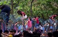 Văn hóa đám đông: Phải chăng do tham lam, ích kỷ?