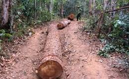 Vụ ai bảo kê gỗ lậu tại Tây Nguyên: Đề xuất tặng gỗ cho hộ nghèo