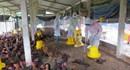 Quảng Ngãi: Tiêu hủy gần 2.800 con gà bị dịch cúm gia cầm