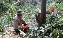 Thanh tra toàn diện 30 ngày dự án phá hàng trăm hecta rừng nuôi bò ở Phú Yên