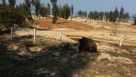 Phú Yên tạm dừng dự án phá rừng phòng hộ làm sân golf, chờ ý kiến Chính phủ