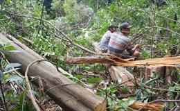 Kết luận thanh tra việc sử dụng đất ở Phú Yên với hàng loạt sai phạm