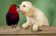 Valentine lãng mạn của thế giới động vật hoang dã