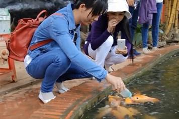 Ngộ nghĩnh xem cá bú bình tại miền Tây
