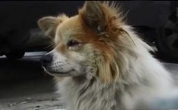 Chuyện cảm động về một chú chó đợi chủ suốt 3 năm trong ngôi nhà hoang