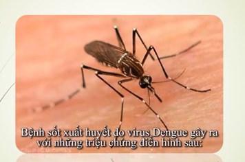 Xem ngay dấu hiệu nhận biết có thể bạn bị sốt xuất huyết