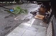 Khoảnh khắc kinh hoàng cây đổ đè chết người đang đi bộ ở Ấn Độ