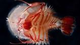 Những quái vật kỳ dị dưới biển sâu