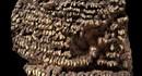Kỳ lạ chiếc ví cổ đại làm bằng 100 chiếc răng chó