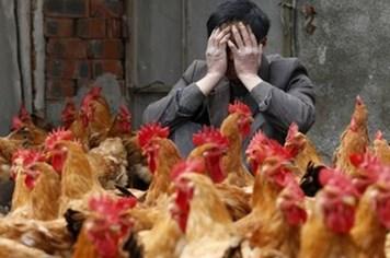 Virus H7N9 có thể gây ra đại dịch toàn cầu