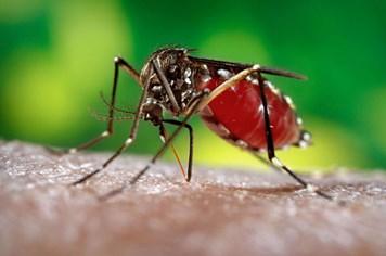 WHO cảnh báo virus Zika đang lây lan nhanh chóng