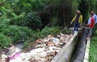 Đề nghị xử phạt Cty vứt xác heo chết ra sông Sài Gòn gần 300 triệu đồng