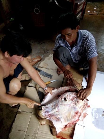 Trộm bò, chỉ cắt lấy... 4 cái chân - ảnh 1