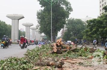Thấy gì qua việc chặt hạ hàng loạt cây xanh ở Hà Nội vừa qua