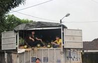7 tấn dưa hấu Quảng Nam về Nghệ An bán hết trong chưa đầy 2 tiếng
