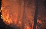 Nghệ An: Nắng nóng, rừng thông cháy ngùn ngụt trong nhiều giờ