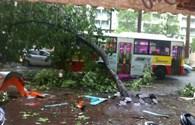 Xe buýt bị cây đè khi đang lưu thông