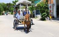 Khám phá ngoại ô Nha Trang bằng xe ngựa