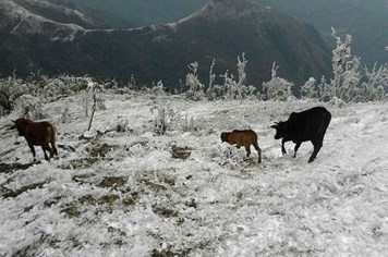 Giá rét kỷ lục ở Quảng Ninh: Vẫn còn nhiều gia súc thất lạc trong rừng