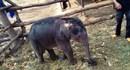 """Đắk Lắk: Giải cứu """"bé"""" voi rừng 2 tháng tuổi bị rơi xuống giếng"""