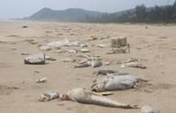 Chủ tịch UBND tỉnh Hà Tĩnh yêu cầu kiểm điểm trách nhiệm vụ môi trường bị đầu độc