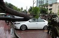 Hà Nội ứng phó cơn bão số 3: Đã có 2 người bị thương do cây đổ vào người