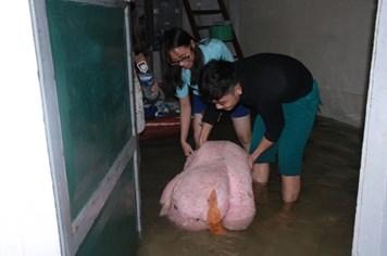 Nghệ An: Tiếp tục mưa to, nước lũ dâng cao, đã có 2 người chết