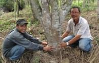 Trang trại Hoàng Trầm – làng nghề trầm hương Khánh Hòa