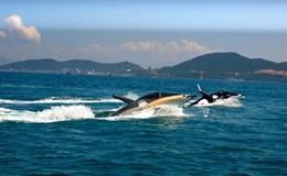 """Tàu lượn cá heo, cá mập – trò chơi """"sát thủ"""" quyến rũ du khách đến Nha Trang"""