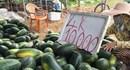 ĐBSCL: Nông dân mỗi đêm ngủ dậy mất trắng 1 triệu đồng