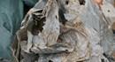 Bình Dương: Tìm thấy 21 hài cốt liệt sĩ tại chiến khu Tam giác sắt