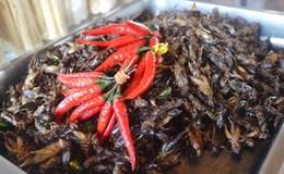 Giòn tan món ăn côn trùng Campuchia
