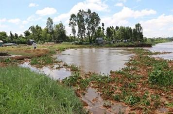 An Giang: Sạt lở nghiêm trọng tại làng hoa Hòa An