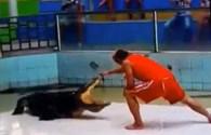 Biểu diễn màn thò tay vào miệng cá sấu, người đàn ông trả giá