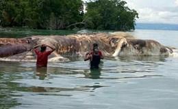 Bí ẩn xác quái vật dài 15m trôi dạt trên bờ biển