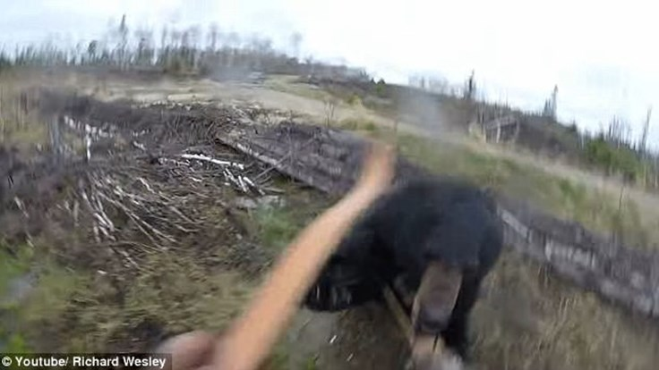 Kinh hoàng giây phút gấu đen điên cuồng lao tới vồ thợ săn