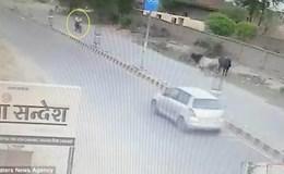 """Bò """"điên"""" bất ngờ lao ra đường hạ gục người đi xe máy"""