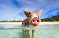 Điểm danh những bãi biển có làn nước xanh trong nhất thế giới