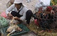 Nguy cơ lan virus cúm H7N9 sang Việt Nam rất lớn
