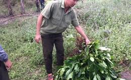 Vụ người dân phản đối ở trụ sở xã Ea Kiết, huyện Cư M'Gar (Đắk Lắk): Lâm trường thu hồi đất để trồng lại rừng