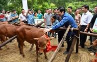 Chủ tịch Nước Trương Tấn Sang trao tặng bò giống giúp đồng bào nghèo khu vực biên giới