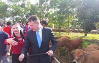 Quỹ Prudence tặng 50 con bò tới các hộ gia đình nghèo ở Kon Tum