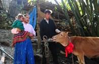 Thêm 108 con bò giống được Viettel trao tặng tới các hộ nghèo biên giới