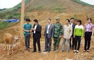 """Chương trình """"Triệu vòng tay hướng về đồng bào vùng lũ"""": Trao bò hỗ trợ hộ dân thiệt hại do mưa lũ tại Cao Bằng"""
