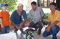 Bình Thuận: Tiếp nhận và thả rùa biển quý hiếm về đại dương