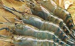 Việt Nam không bơm Pectin vào tôm xuất khẩu