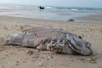 DN chế biến thủy sản tại 4 tỉnh miền Trung yêu cầu Formosa phải có trách nhiệm về sự cố cá chết