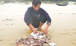 Ứng trước 50% kinh phí bồi thường, hỗ trợ ngư dân 4 tỉnh miền Trung